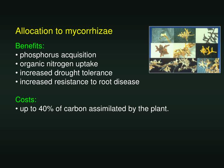 Allocation to mycorrhizae