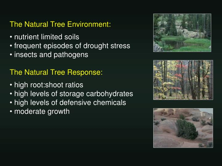 The Natural Tree Environment: