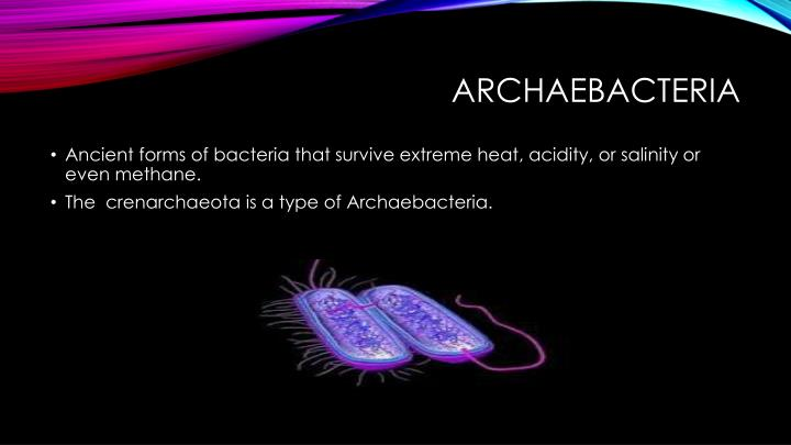 Archaebacteria