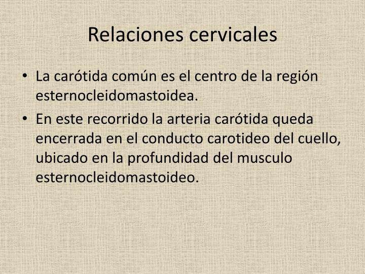 Relaciones cervicales