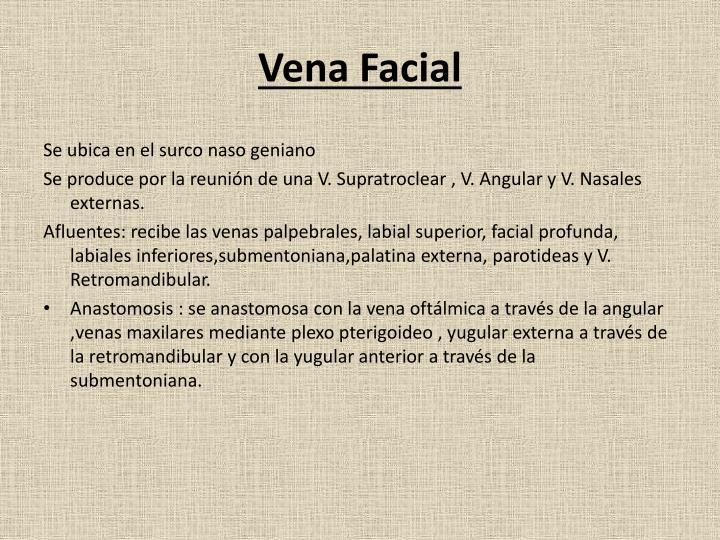 Vena Facial
