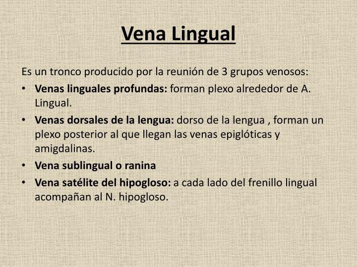 Vena Lingual