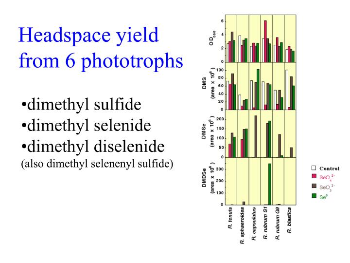 Headspace yield from 6 phototrophs