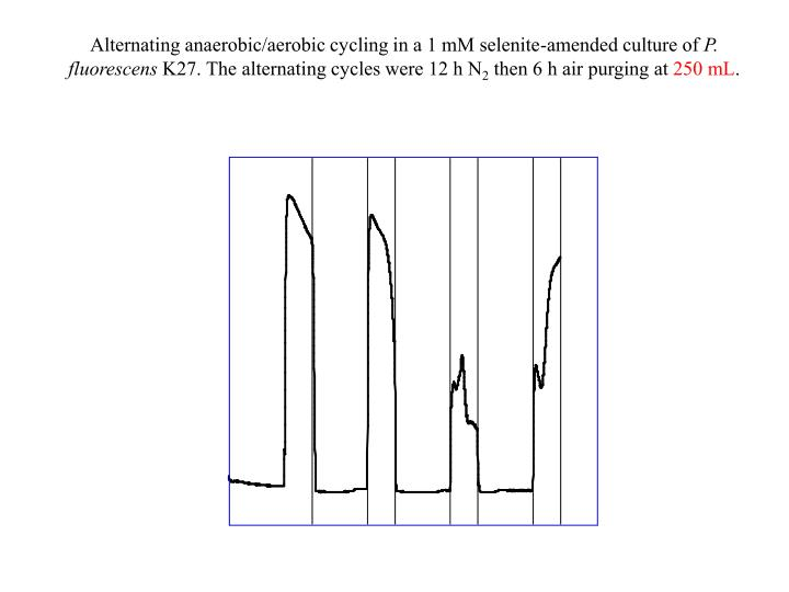 Alternating anaerobic/aerobic cycling in a 1 mM selenite-amended culture of