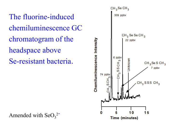The fluorine-induced chemiluminescence GC chromatogram of the headspace above