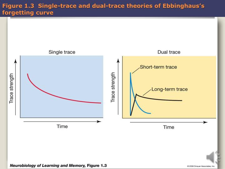 Figure 1 3 single trace and dual trace theories of ebbinghaus s forgetting curve