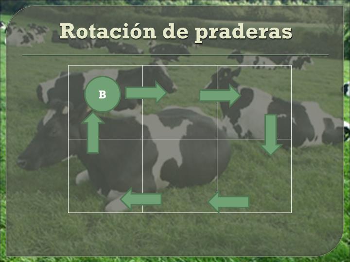 Rotación de praderas