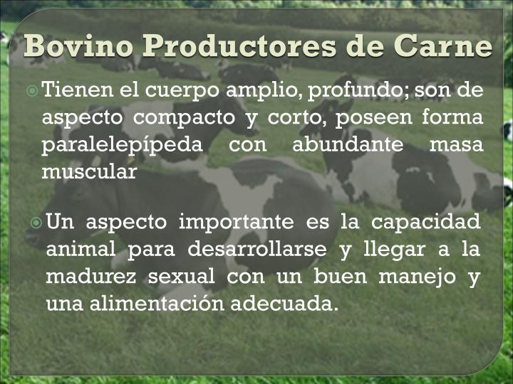 Bovino Productores de Carne