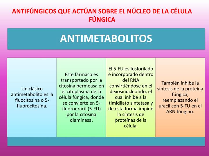 ANTIFÚNGICOS QUE ACTÚAN SOBRE EL NÚCLEO DE LA CÉLULA FÚNGICA