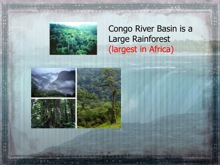 Congo River Basin is a Large Rainforest