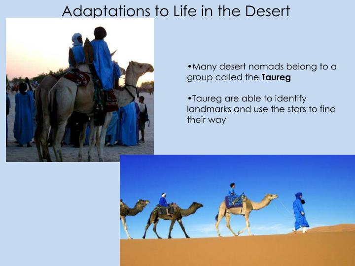 Adaptations to Life in the Desert