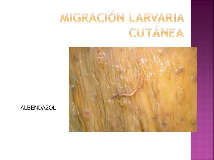 MIGRACIÓN LARVARIA CUTÁNEA