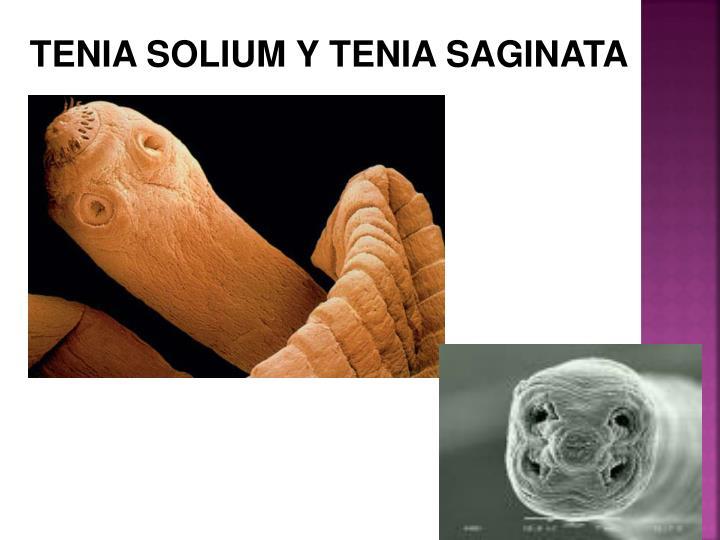 TENIA SOLIUM Y TENIA SAGINATA