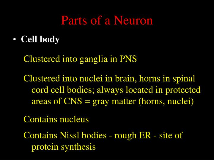 Parts of a Neuron