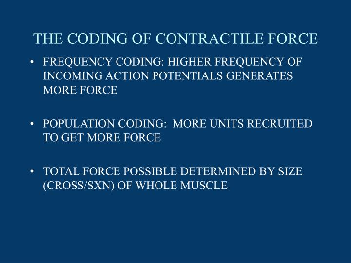 THE CODING OF CONTRACTILE FORCE
