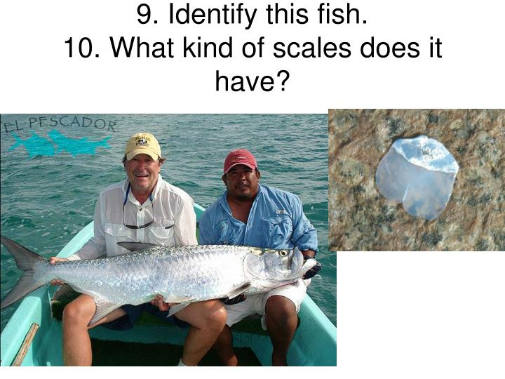 Ppt identify this fish 2 what ocean zone would this for What kind of fish do i have