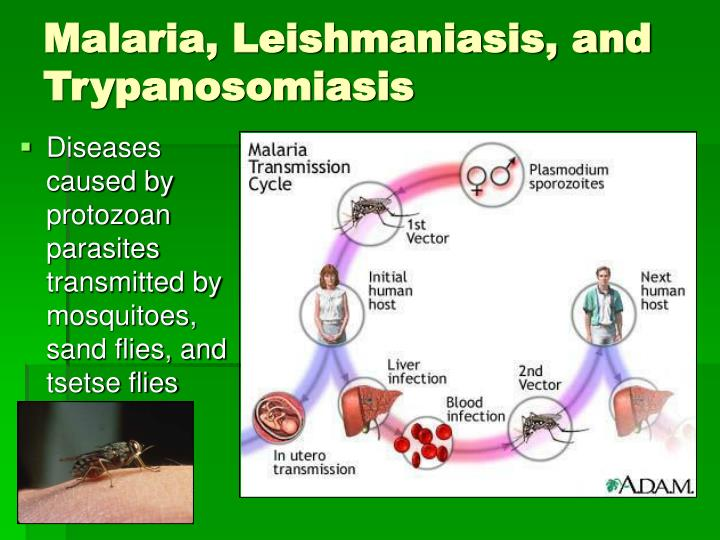 Malaria, Leishmaniasis, and Trypanosomiasis