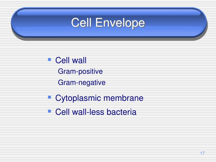 Cell Envelope