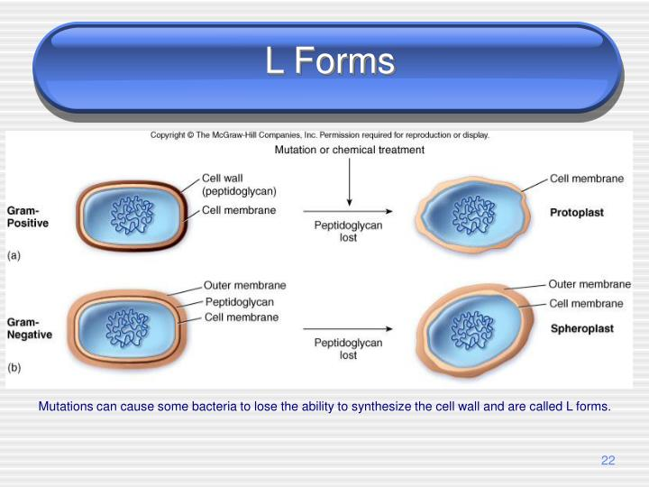 L Forms