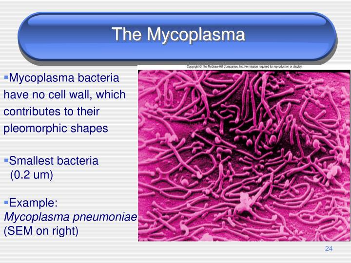 The Mycoplasma
