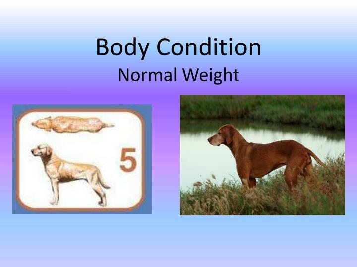 Body Condition