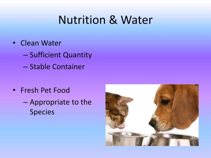 Nutrition water
