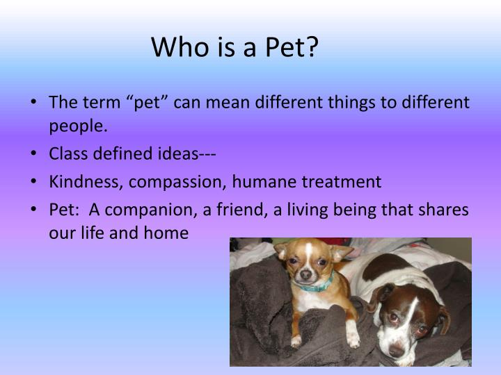 Who is a pet1