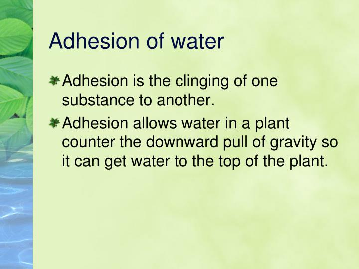 Adhesion of water