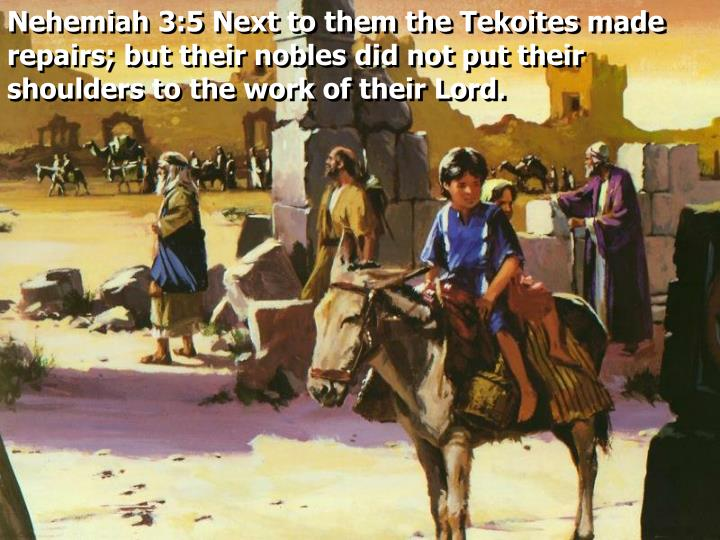 Nehemiah 3:5 Next to them the Tekoites made repairs; but their nobles did not put their shoulders to the work of their Lord.
