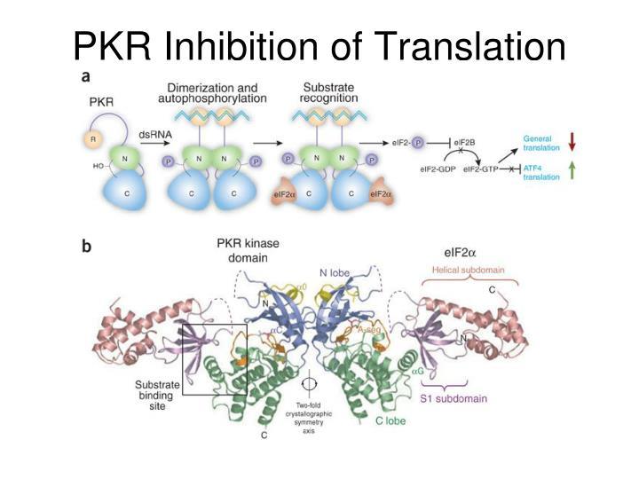 PKR Inhibition of Translation