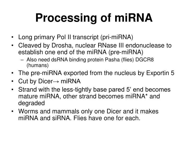 Processing of miRNA