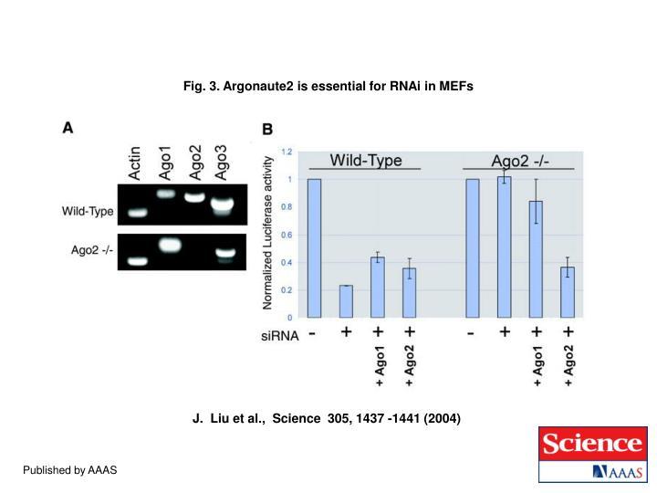 Fig. 3. Argonaute2 is essential for RNAi in MEFs