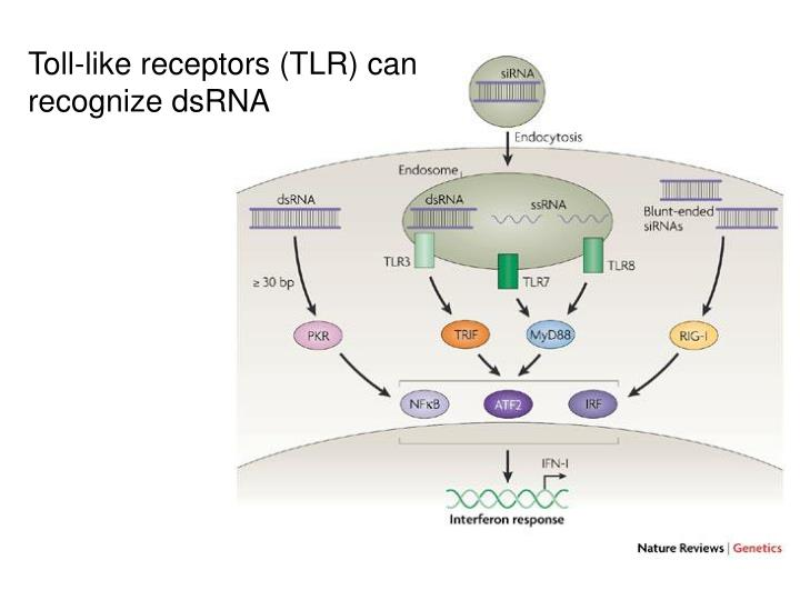 Toll-like receptors (TLR) can
