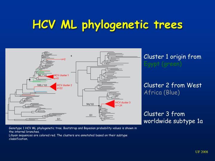 HCV ML phylogenetic trees