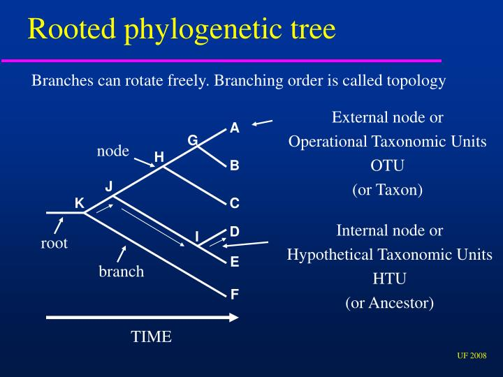 Rooted phylogenetic tree