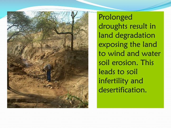 Prolonged droughts result in land degradation exposing the land to wind and water soil erosion. This leads to soil infertility and desertification.