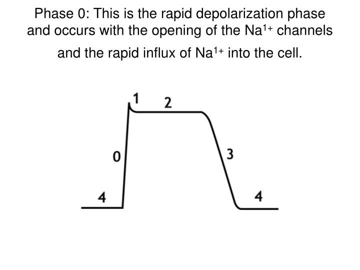 Phase 0: This is the rapid depolarization phase and occurs with the opening of the Na