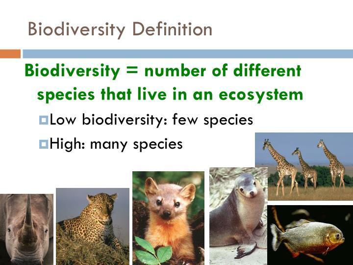 Biodiversity Definition