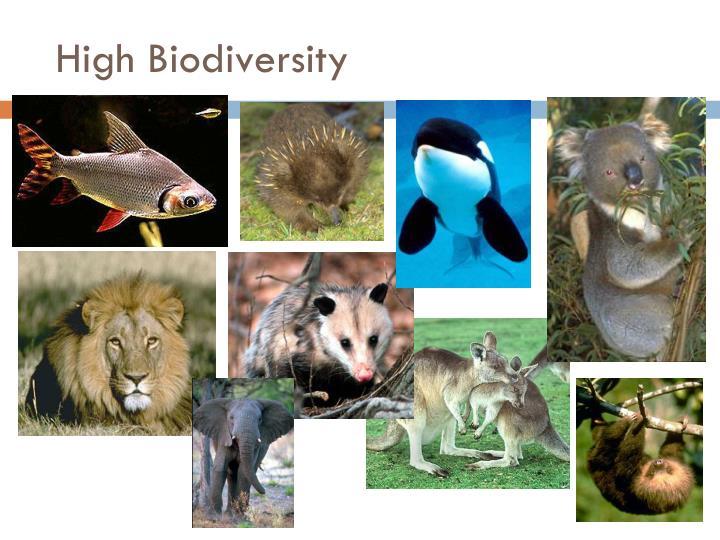 High Biodiversity