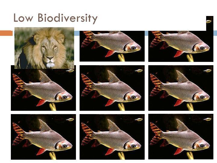 Low Biodiversity