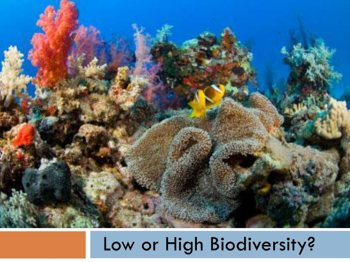 Low or High Biodiversity?