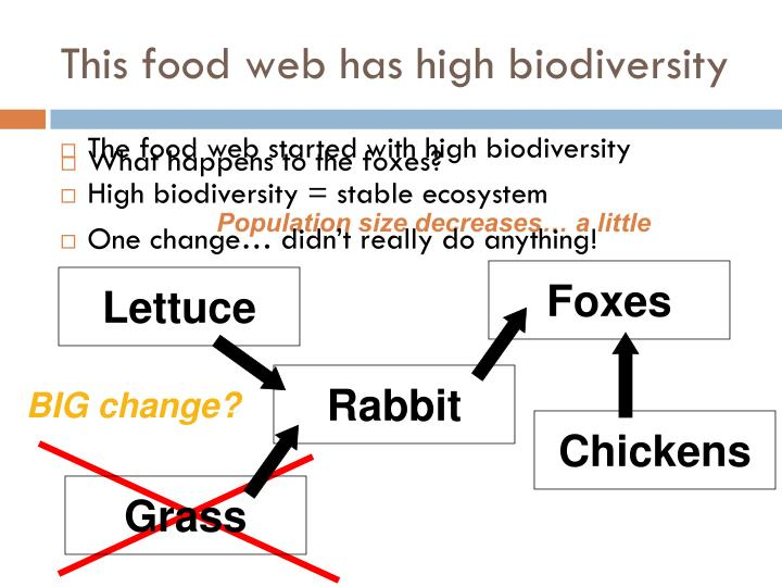 This food web has high biodiversity