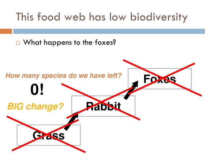 This food web has low biodiversity