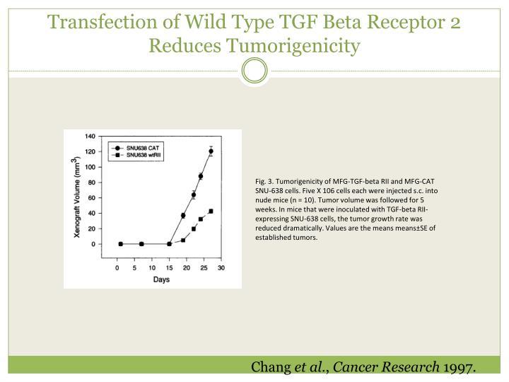 Transfection of Wild Type TGF Beta Receptor 2 Reduces Tumorigenicity