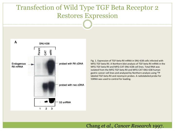 Transfection of Wild Type TGF Beta Receptor 2 Restores Expression