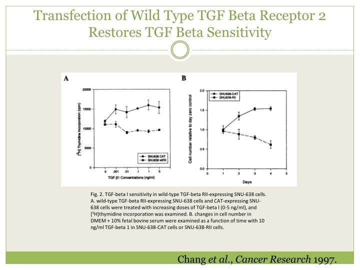 Transfection of Wild Type TGF Beta Receptor 2 Restores TGF Beta Sensitivity