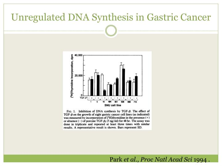 Unregulated DNA Synthesis in Gastric Cancer