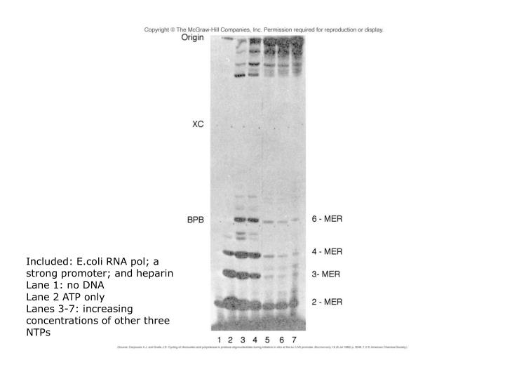 Included: E.coli RNA pol; a strong promoter; and heparin