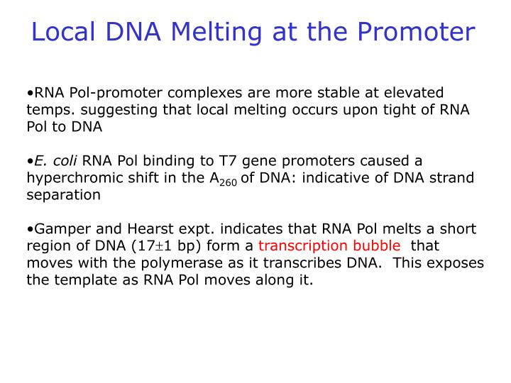 Local DNA Melting at the Promoter