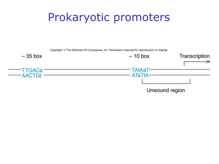 Prokaryotic promoters